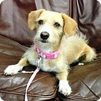 Adopt A Pet :: Lilo - San Diego, CA
