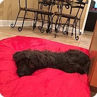 Adopt A Pet :: Lady - Windermere, FL