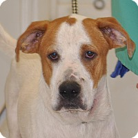 Adopt A Pet :: Junior - Sunrise Beach, MO