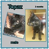 Adopt A Pet :: Topaz - Richmond, CA