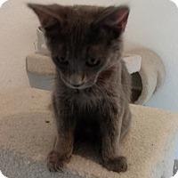 Adopt A Pet :: Bane - El Paso, TX