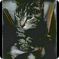 Adopt A Pet :: Karoke - Trevose, PA