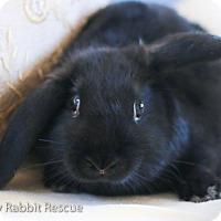 Adopt A Pet :: Katy - Livermore, CA