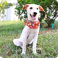 Adopt A Pet :: Dormie - San Mateo, CA
