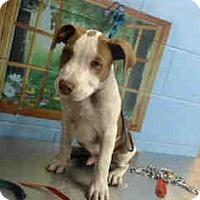 Adopt A Pet :: URGENT on 12/27 SAN BERNARDINO - San Bernardino, CA