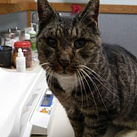 Adopt A Pet :: Jeffrey - Putnam, CT