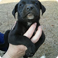 Adopt A Pet :: Skye - pending - Manchester, NH