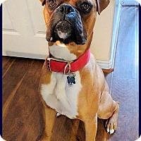 Adopt A Pet :: Rocky - Boise, ID