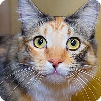 Adopt A Pet :: Hazel - Irvine, CA