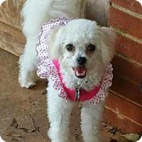 Adopt A Pet :: Littles - Winder, GA