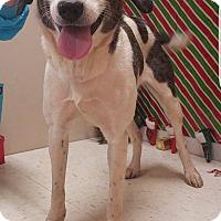 Adopt A Pet :: Rebecca - New Oxford, PA