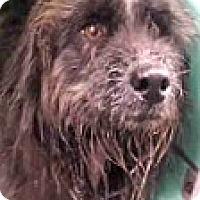 Adopt A Pet :: Lief - Boulder, CO