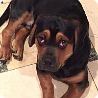 Adopt A Pet :: Hunter - Freeport, NY
