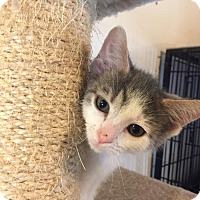 Adopt A Pet :: Woodhouse - Cincinnati, OH