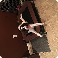 Adopt A Pet :: Sally Mae - Fenton, MO