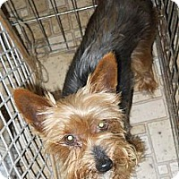 Adopt A Pet :: Zoey - Homer, NY