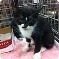 Adopt A Pet :: Sebastion - Pittstown, NJ