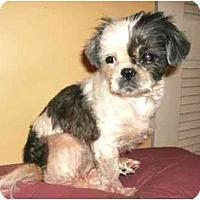 Adopt A Pet :: Sadie - Mooy, AL