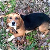 Adopt A Pet :: Benji - Dundas, VA