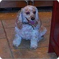 Adopt A Pet :: Taffy - Sugarland, TX