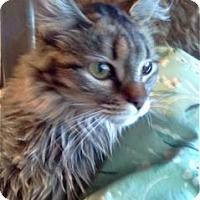 Adopt A Pet :: K-Talia2-Inez - Colorado Springs, CO