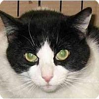 Adopt A Pet :: Bandit - Plainville, MA