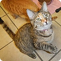 Adopt A Pet :: Katherine - Byron Center, MI