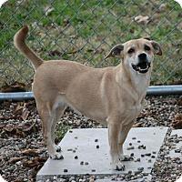 Adopt A Pet :: Coco - Lufkin, TX