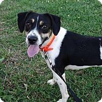 Adopt A Pet :: Frey - Lebanon, CT
