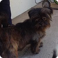 Adopt A Pet :: Chubby - San Diego, CA