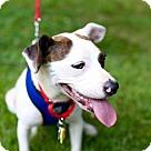 Adopt A Pet :: Yang