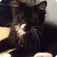 Adopt A Pet :: Willie - McHenry, IL