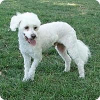 Adopt A Pet :: Cody - Walnut Creek, CA