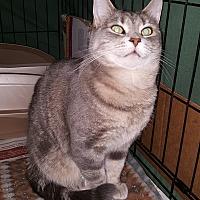 Adopt A Pet :: Josie - Dewitt, MI