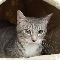 Adopt A Pet :: Glimmer - Germantown, MD