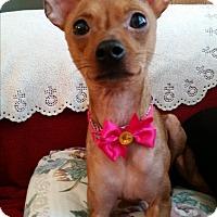 Adopt A Pet :: Nadia - McDonough, GA