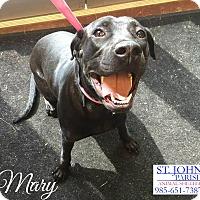 Adopt A Pet :: Mary - Laplace, LA