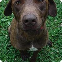 Adopt A Pet :: Hurley - Batesville, AR