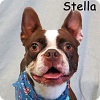 Adopt A Pet :: Stella - Warren, PA