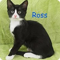Adopt A Pet :: Ross - Elkhorn, WI