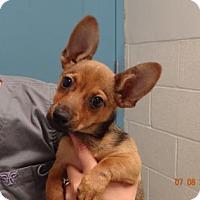 Adopt A Pet :: Jinnie - Gulfport, MS