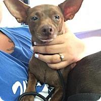 Adopt A Pet :: Romeo - Willingboro, NJ