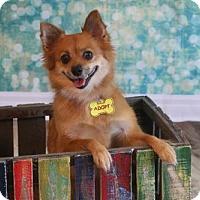 Adopt A Pet :: Jonnie - Dallas, TX