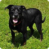 Adopt A Pet :: MEMPHIS - Naples, FL