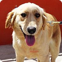 Adopt A Pet :: Madison - BIRMINGHAM, AL