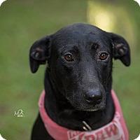 Adopt A Pet :: Serenity - Daleville, AL