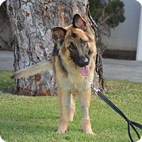 Adopt A Pet :: Durango - Mira Loma, CA