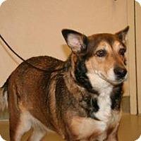 Adopt A Pet :: Gypsy - Wildomar, CA
