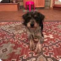 Adopt A Pet :: Lucy (FORT COLLINS) - Fort Collins, CO