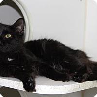 Adopt A Pet :: Selima - Greensboro, NC